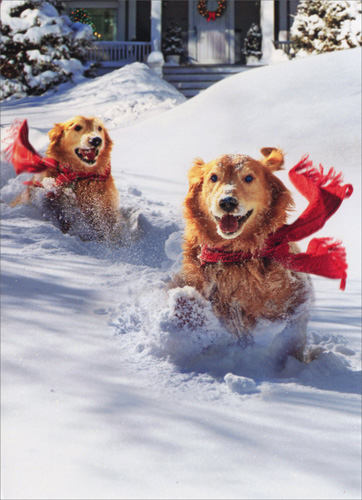 Golden Retrievers In Snow Funny Humorous Dog Christmas