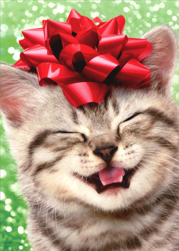 Cute Christmas Cats Wallpaper Happy Kitten With Red Bow Cat Christmas Card By Avanti Press