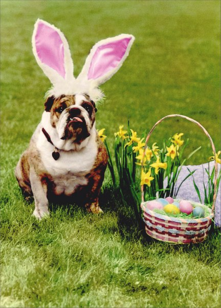 Bulldog With Rabbit Ears Funny Humorous Easter Card By