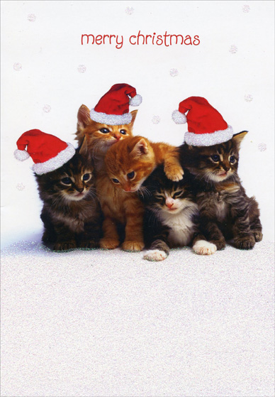 Bunch Of Kittens Box Of 18 Cat Christmas Cards By Designer