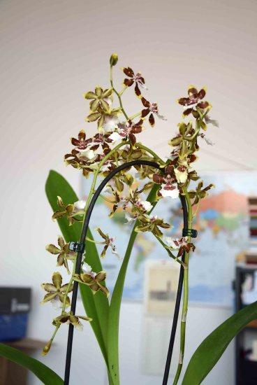 Cambria at the studio #cambria #botanical #plantsatwork