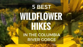 5 Best Wildflower Hikes in the Columbia River Gorge