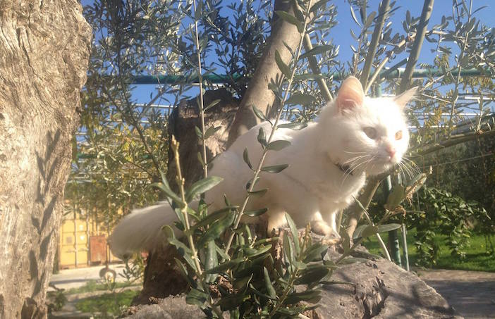 Dias frolicking amongst the olive trees of Lesvos (Photo via Reunite Dias on Facebook)