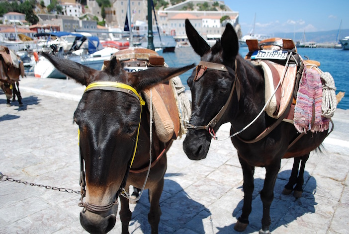 Hydra's only mode of transportation-- donkeys! (Photo by Marissa Tejada)