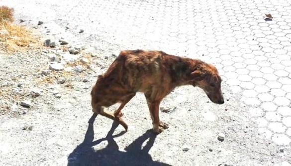 "(Photos) Abandoned Greek Dog Brings ""Light"" to Rescuer"