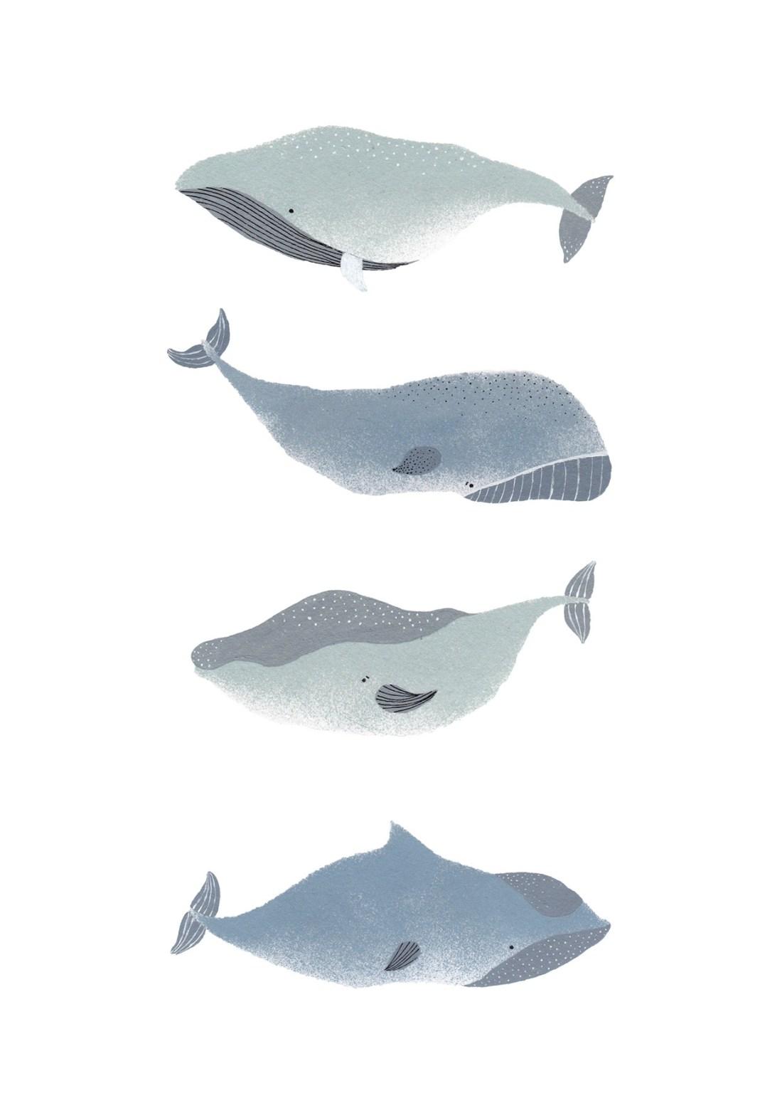 Wale-Walillustration-Blauwal