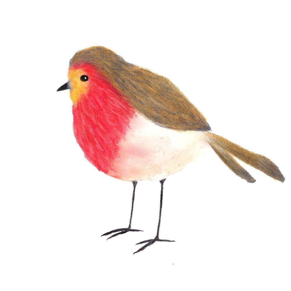 Rotkehlchen-Kleinvögel-Pastell