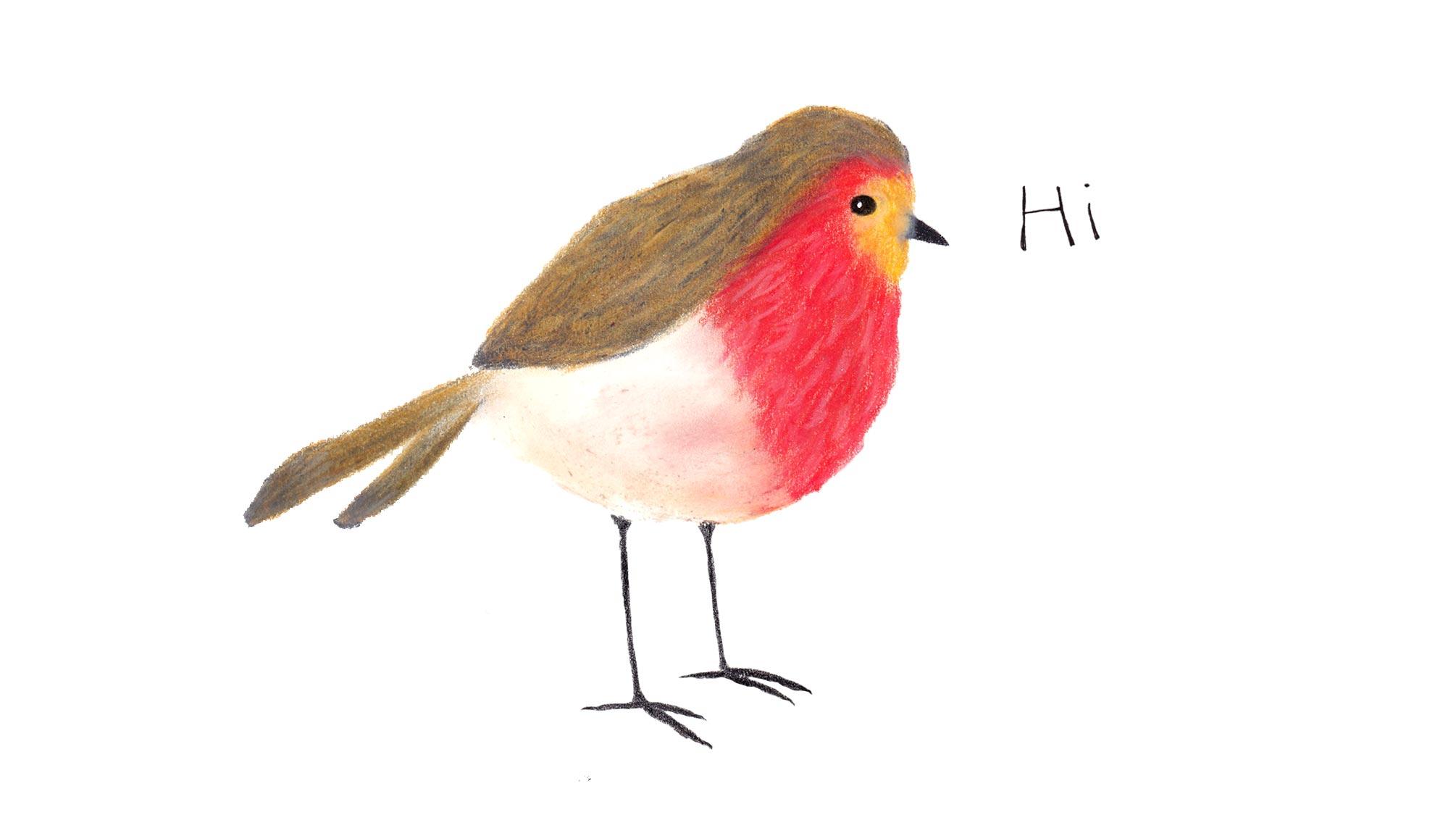 Rotkehlchen-Vogelillustration-Fliegenschnäpper