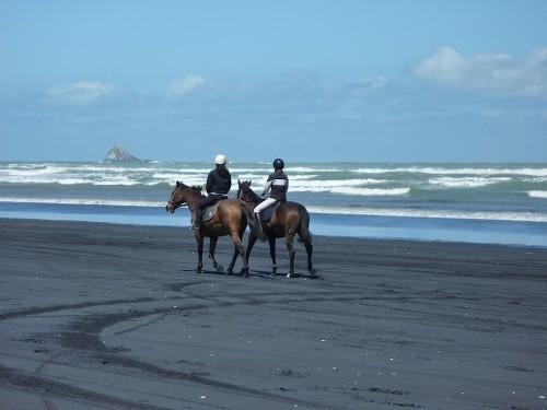 muriwai-horses