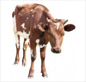 características de los animales, clases, tipos, clasificación
