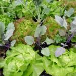 Gemüse aus dem Paradiesgarten