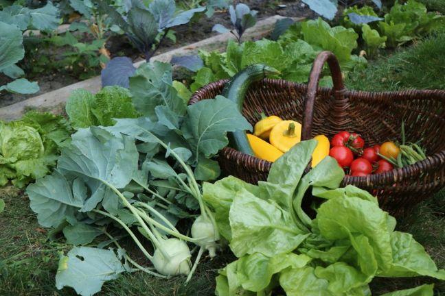 Gemüseanbau Kurs