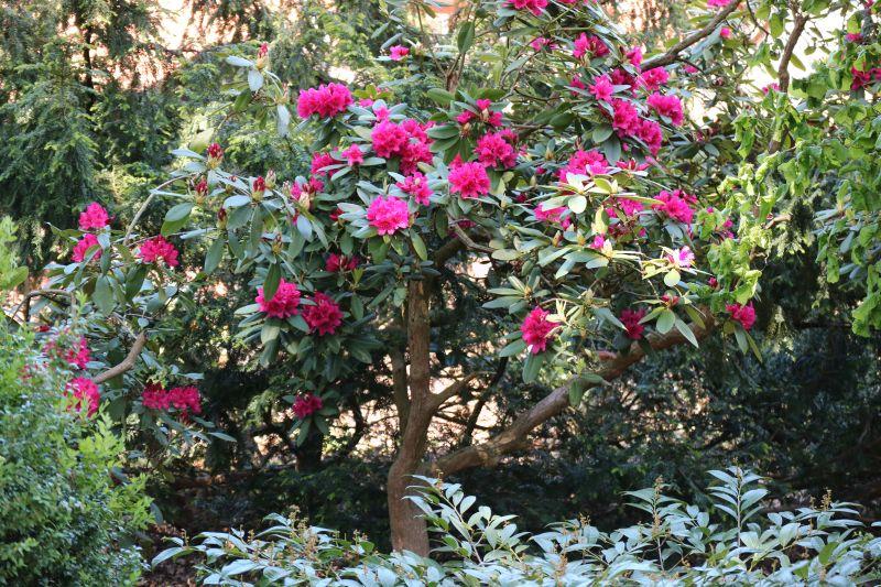 Garten Rotenburg Wümme