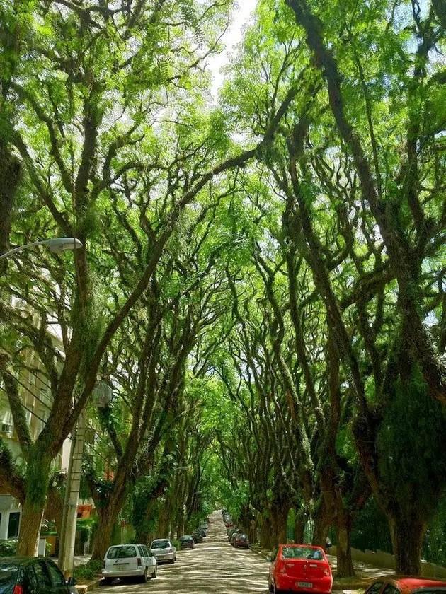 tree tunnels Street in Porto Alegre, Brazil2