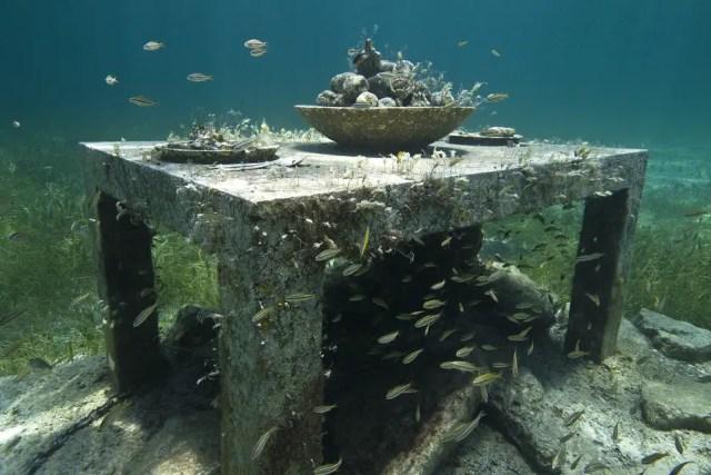 Onderwaterbeelden 17