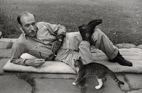 kunstenaars en katten9
