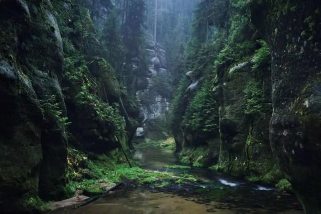 Het land van de gebroeders Grimm | Paradijsvogels Magazine