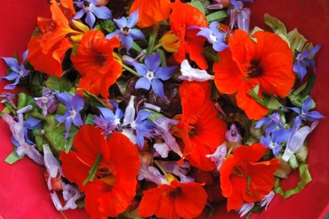 Eetbare bloemen   Paradijsvogels Magazine