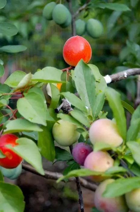 De boom met 40 vruchten | Paradijsvogels Magazine
