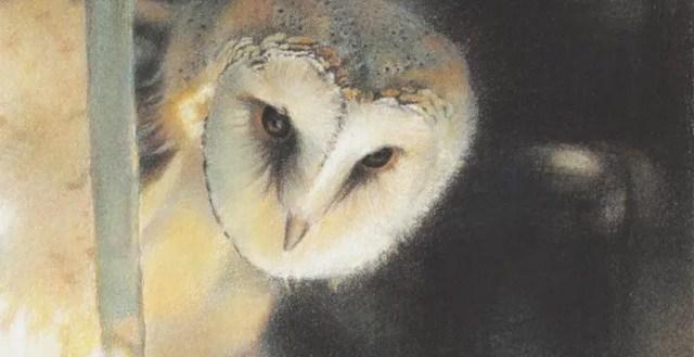 Het Uilendagboek   Een grote stap voor een klein uilenkind