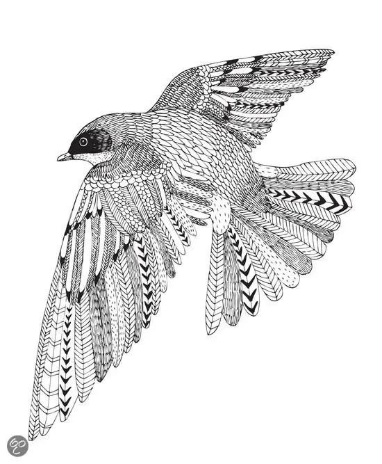 Volwassen Kleurplaten Schildpad Kleuren Voor Gevorderden Paradijsvogels Magazine