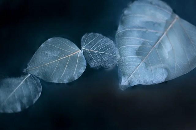 Een drijvend kunstwerk van 1000 lichtgevende bladeren   Paradijsvogels Magazine
