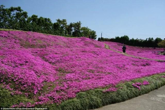 japanse man zaait bloemen3