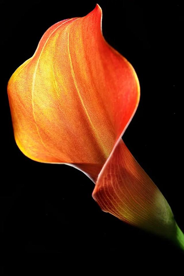 bloemkunst foto of papier17