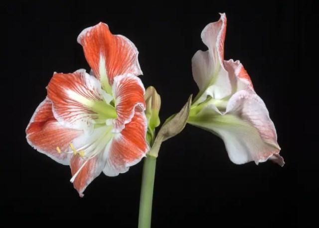 bloemkunst foto of papier18
