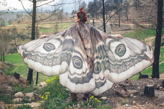 sjaals vlinder