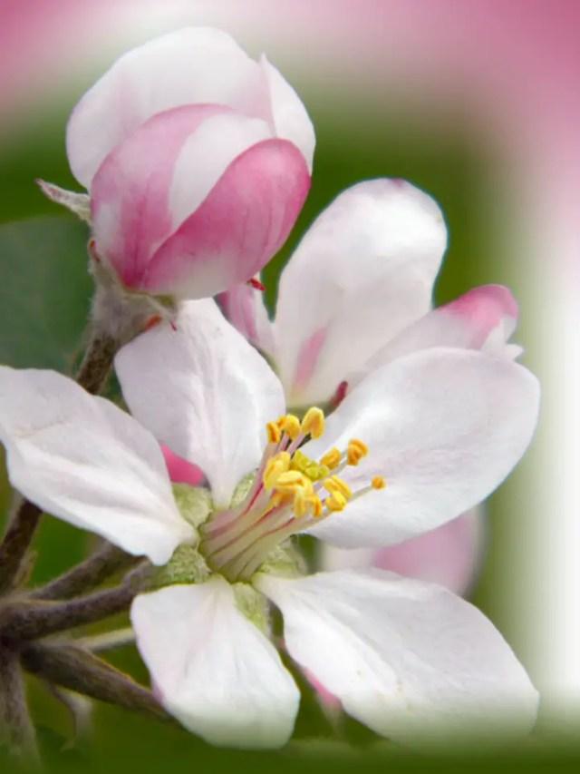 groenten die bloeien appel