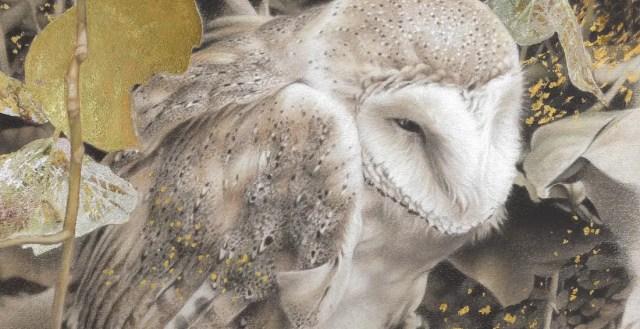 Het uilendagboek   Ook uilen willen spelen