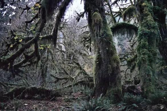 bomen van mos3
