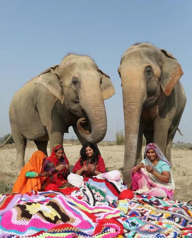 olifanten3