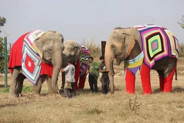 olifanten5
