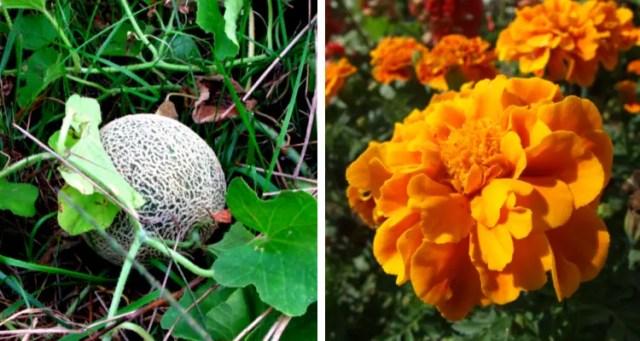 Planten samen groeien