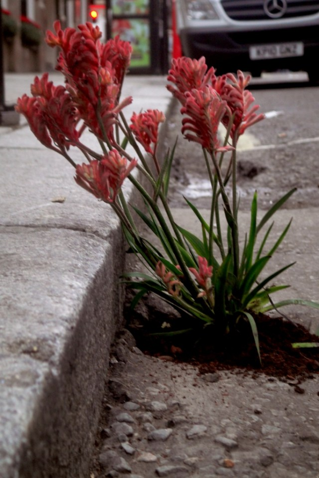planting-flowers-in-potholes-13