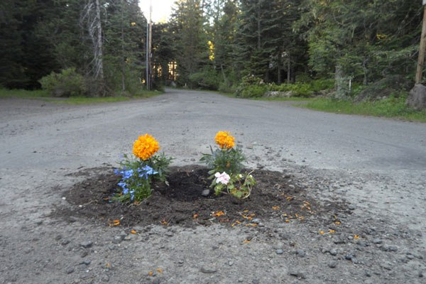 planting-flowers-in-potholes-5