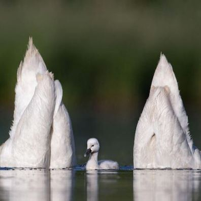Prachtige foto's die de schoonheid van watervogels laten zien