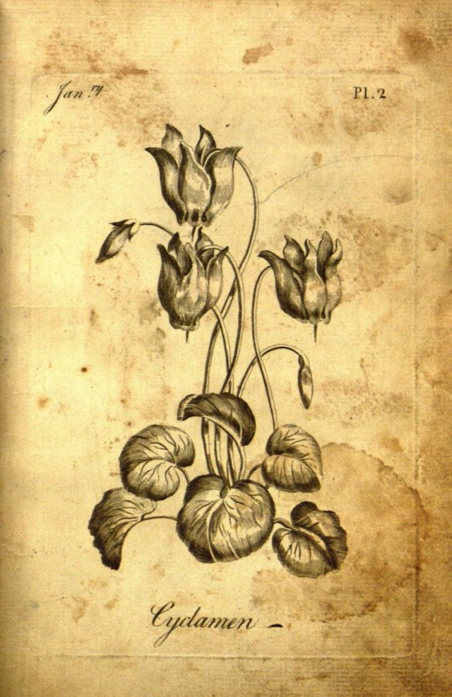 The Florist 4