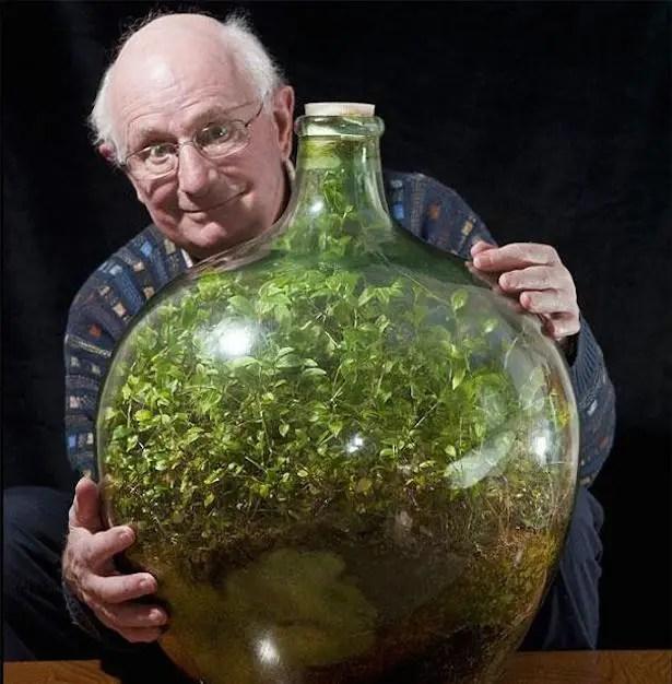 Bottled garden 1