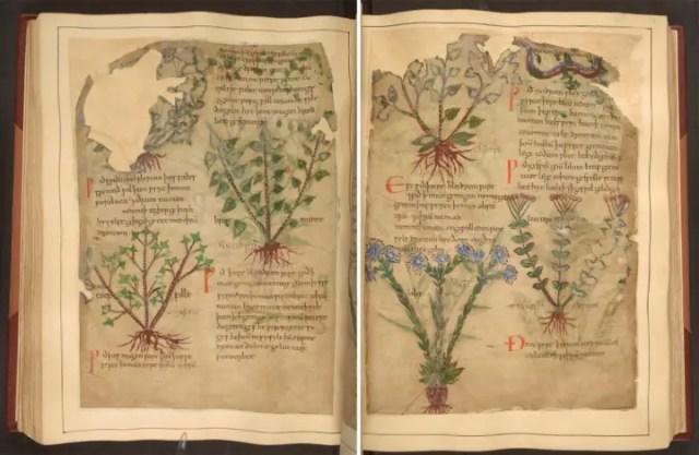 herbal 8