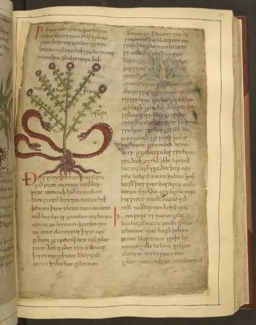 herbal 9