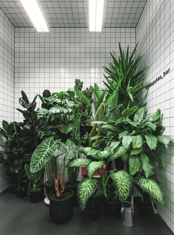 plantenhuis 6