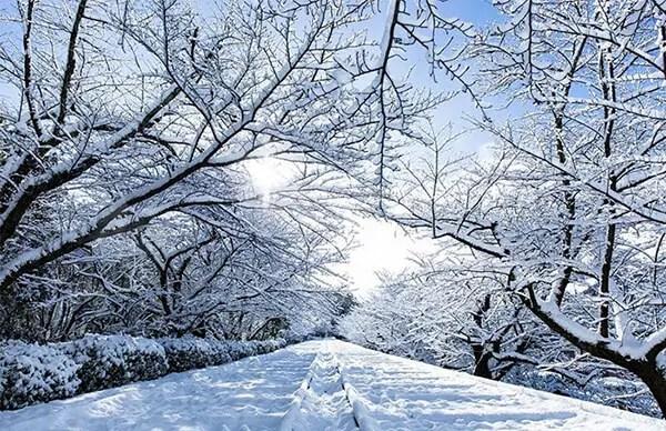 Kyoto in de sneeuw - 12