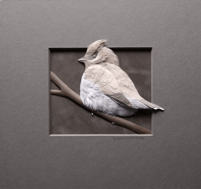 Paradijsvogel - 3