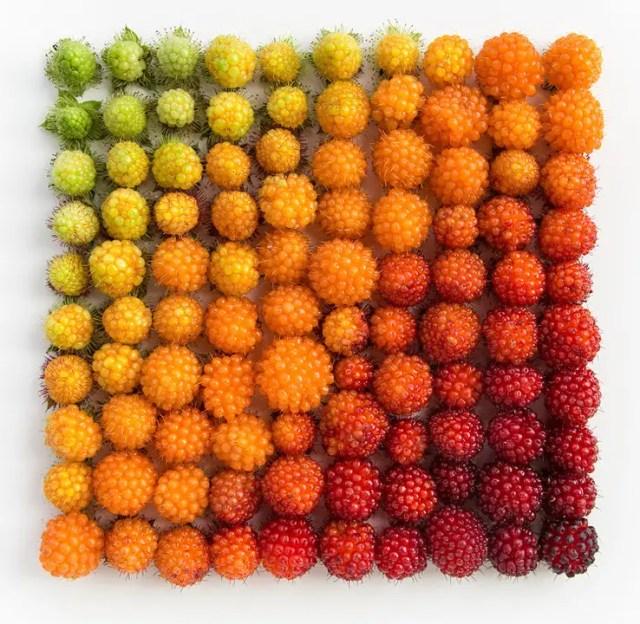 Salmonberry-Colour-Arrangement-by-Emily-Blancoe