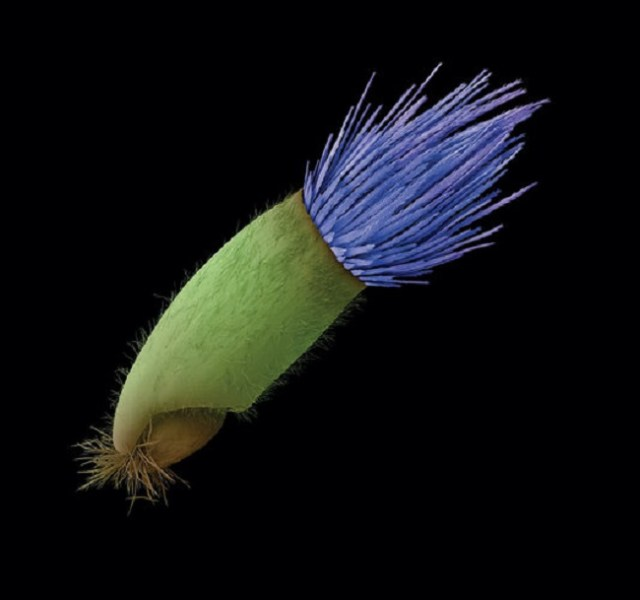 bijzondere zaden 8