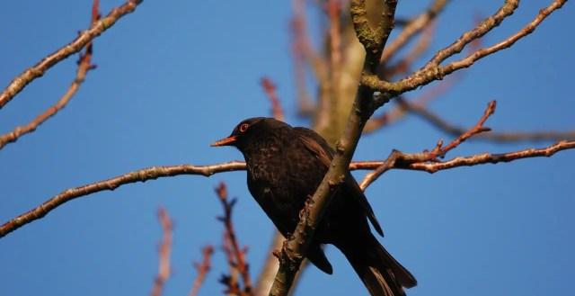 Rutger Kopland herinnert ons hoe energiek vogelzang maakt in de lente