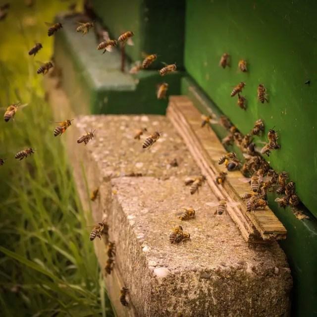 Bijen zijn belangrijk 2